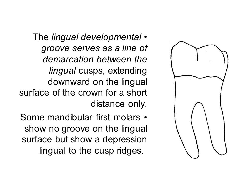 The angle formed by the distolingual cusp ridge of the mesiolingual cusp and the mesiolingual cusp ridge of the distolingual cusp is more obtuse than the angulations of the cusp ridges at the tips of the lingual cusps.