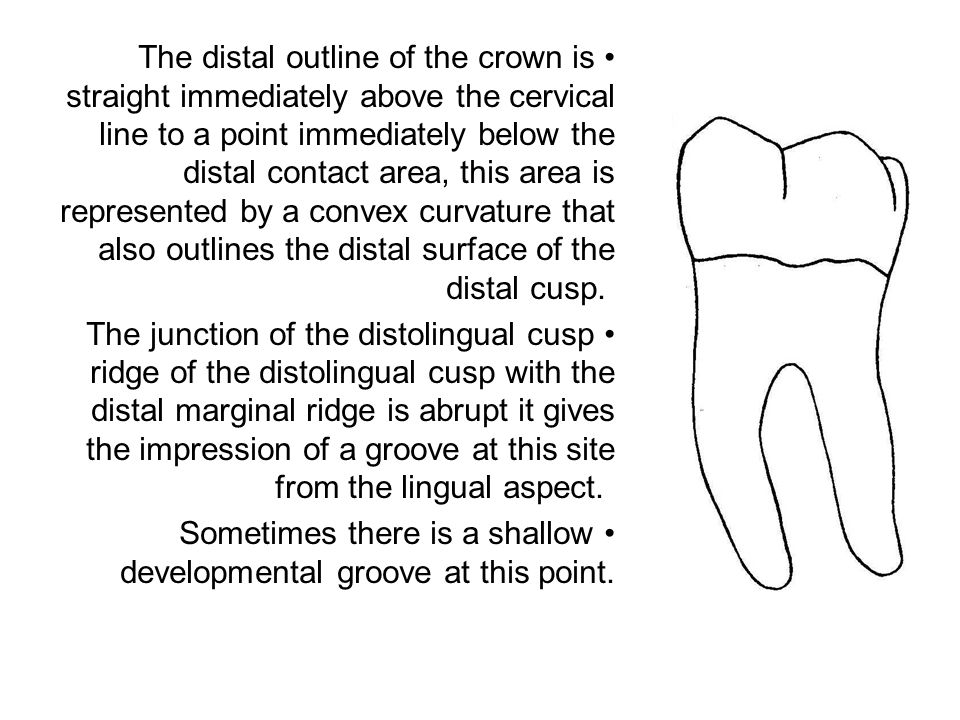 If a specimen of the first molar is held with the distal surface of the crown at right angles to the line of vision, a great part of the occlusal surface may be seen and some part of each of the five cusps also comparing favorably with the mandibular second premolar.