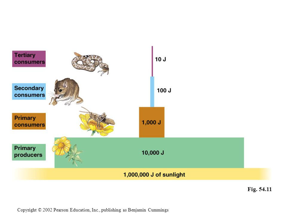 Pyramids of biomass represent the ecological consequence of low trophic efficiencies.