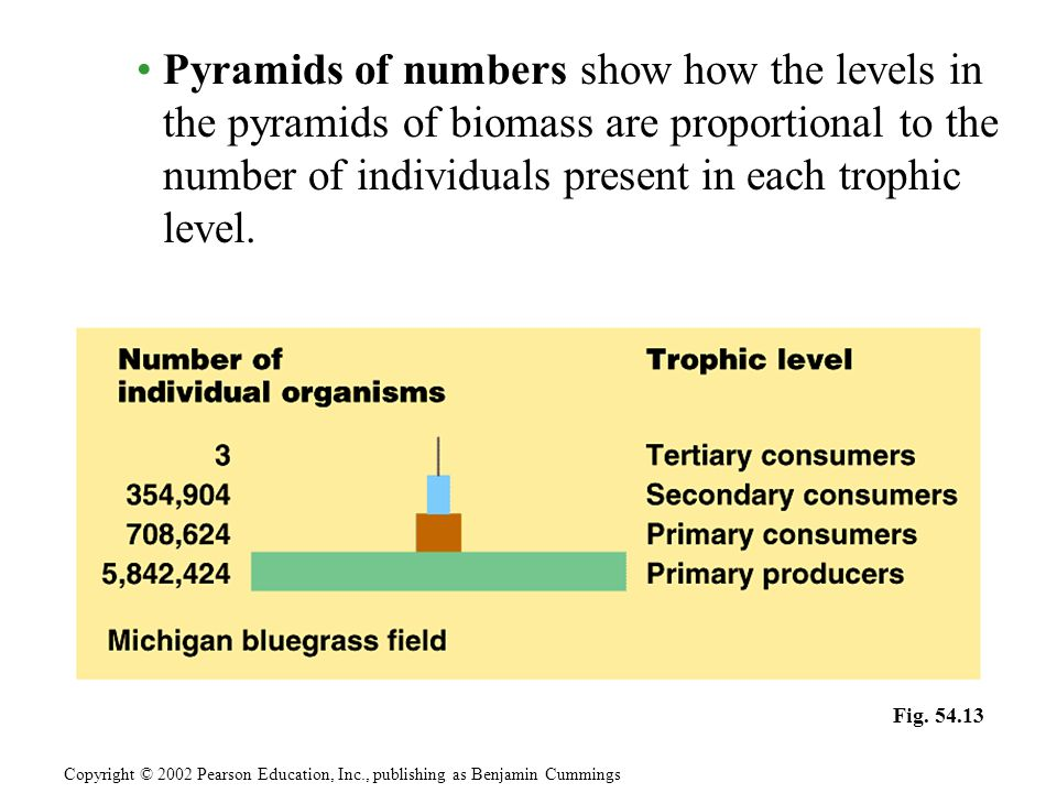 Pyramids of numbers show how the levels in the pyramids of biomass are proportional to the number of individuals present in each trophic level.