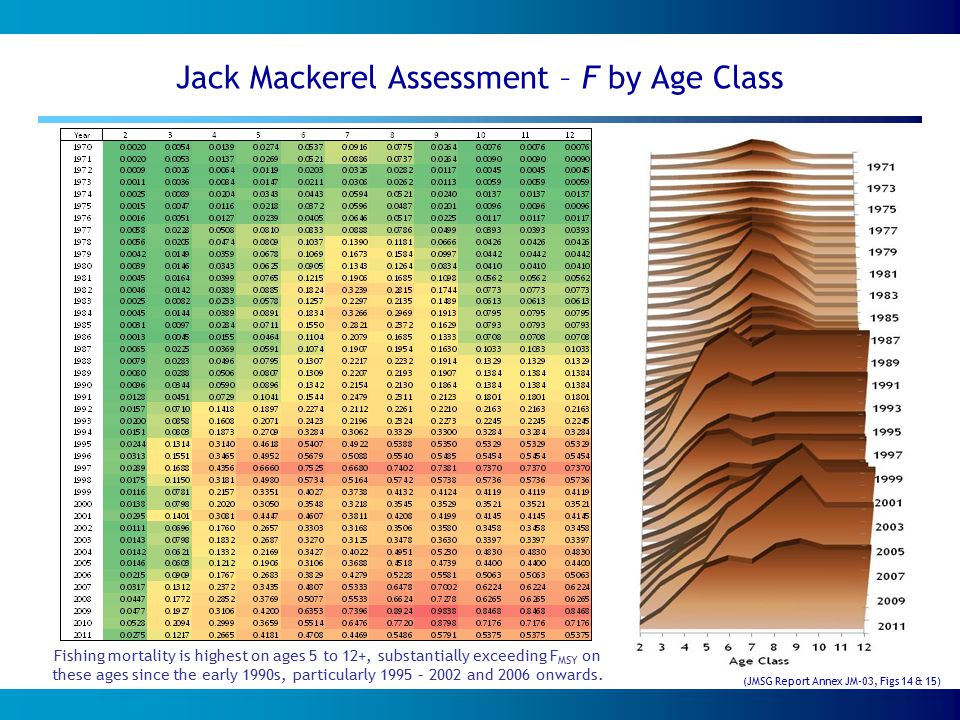 Jack Mackerel Assessment – F by Age Class Fishing mortality is highest on ages 5 to 12+, substantially exceeding F MSY on these ages since the early 1990s, particularly 1995 – 2002 and 2006 onwards.