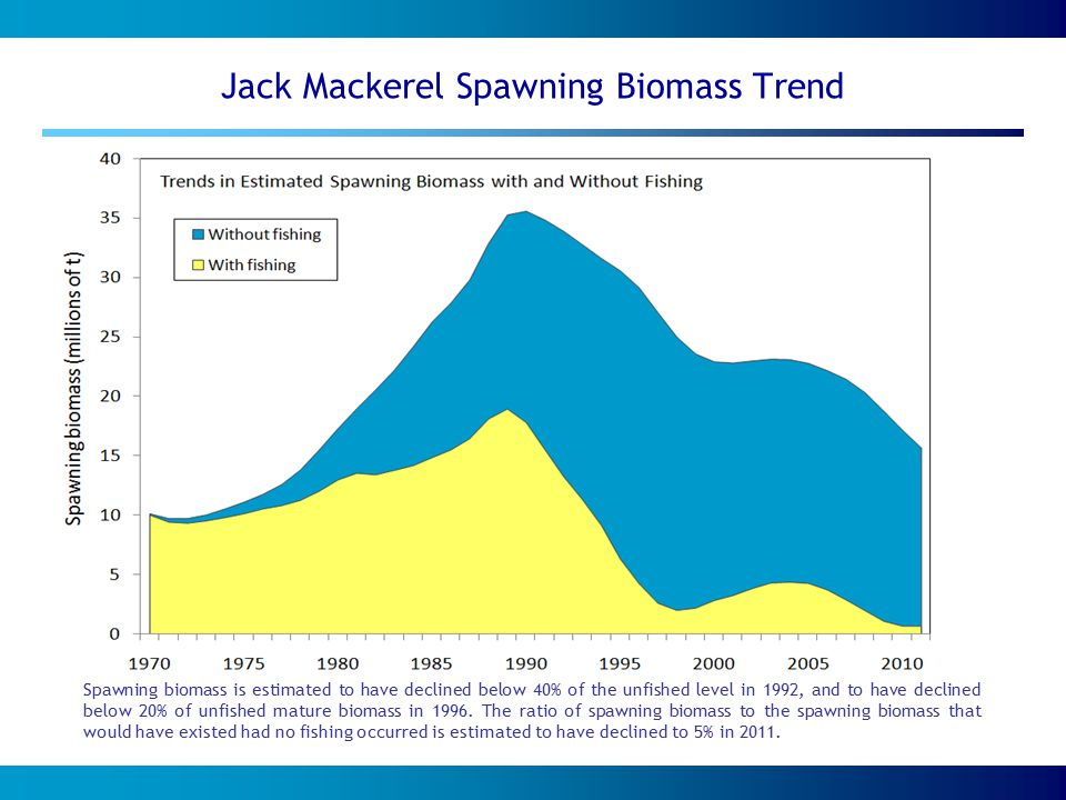 Jack Mackerel Spawning Biomass Trend Spawning biomass is estimated to have declined below 40% of the unfished level in 1992, and to have declined below 20% of unfished mature biomass in 1996.