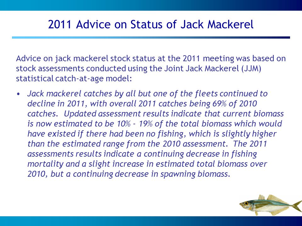 2011 Advice on Status of Jack Mackerel Advice on jack mackerel stock status at the 2011 meeting was based on stock assessments conducted using the Joint Jack Mackerel (JJM) statistical catch-at-age model: Jack mackerel catches by all but one of the fleets continued to decline in 2011, with overall 2011 catches being 69% of 2010 catches.