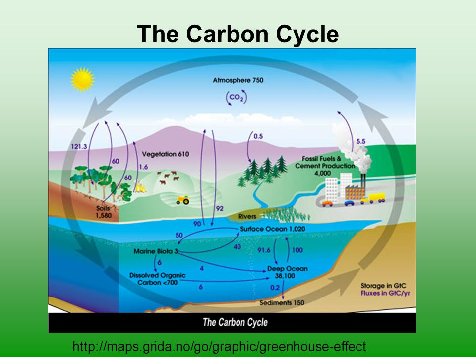 The Carbon Cycle http://maps.grida.no/go/graphic/greenhouse-effect