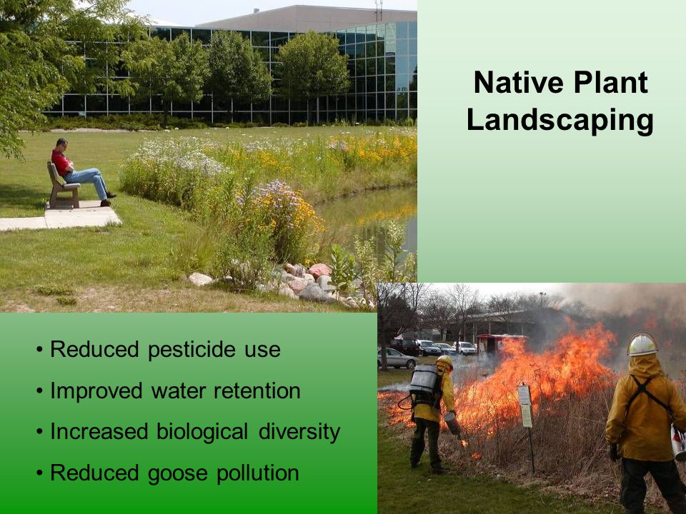 Native Plant Landscaping Reduced pesticide use Improved water retention Increased biological diversity Reduced goose pollution