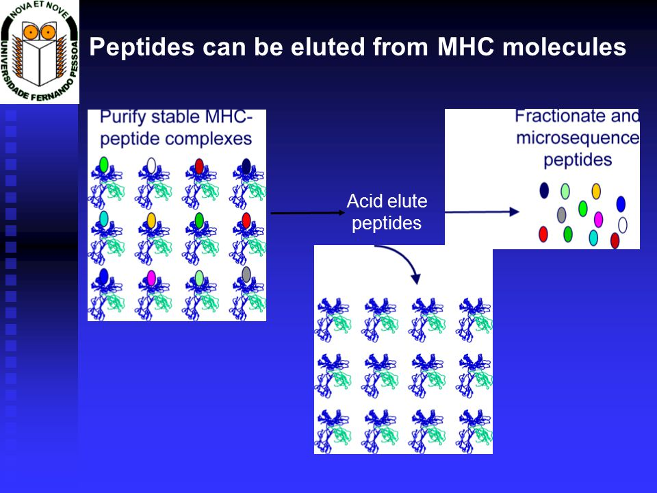 Peptides can be eluted from MHC molecules Acid elute peptides
