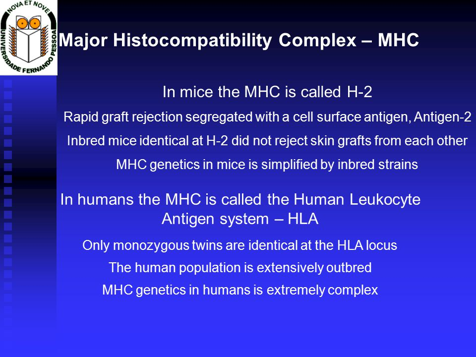 Major Histocompatibility Complex – MHC In humans the MHC is called the Human Leukocyte Antigen system – HLA Only monozygous twins are identical at the HLA locus The human population is extensively outbred MHC genetics in humans is extremely complex In mice the MHC is called H-2 Rapid graft rejection segregated with a cell surface antigen, Antigen-2 Inbred mice identical at H-2 did not reject skin grafts from each other MHC genetics in mice is simplified by inbred strains