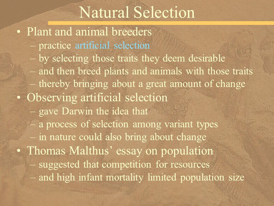 Plant and animal breeders –practice artificial selection –by selecting those traits they deem desirable –and then breed plants and animals with those
