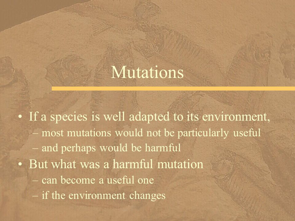 If a species is well adapted to its environment, –most mutations would not be particularly useful –and perhaps would be harmful But what was a harmful