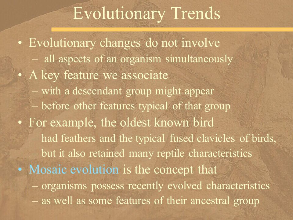Evolutionary changes do not involve – all aspects of an organism simultaneously A key feature we associate –with a descendant group might appear –befo