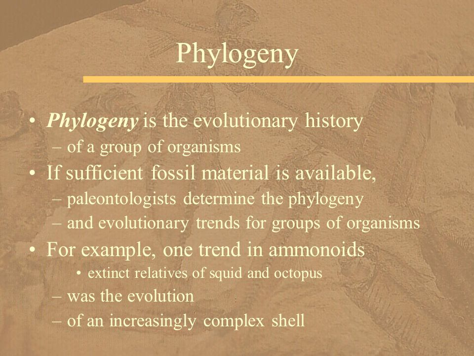 Phylogeny is the evolutionary history –of a group of organisms If sufficient fossil material is available, –paleontologists determine the phylogeny –a