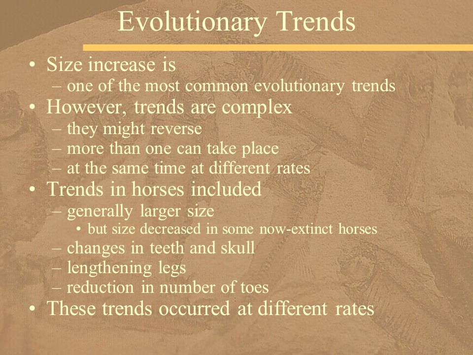 Size increase is –one of the most common evolutionary trends However, trends are complex –they might reverse –more than one can take place –at the sam