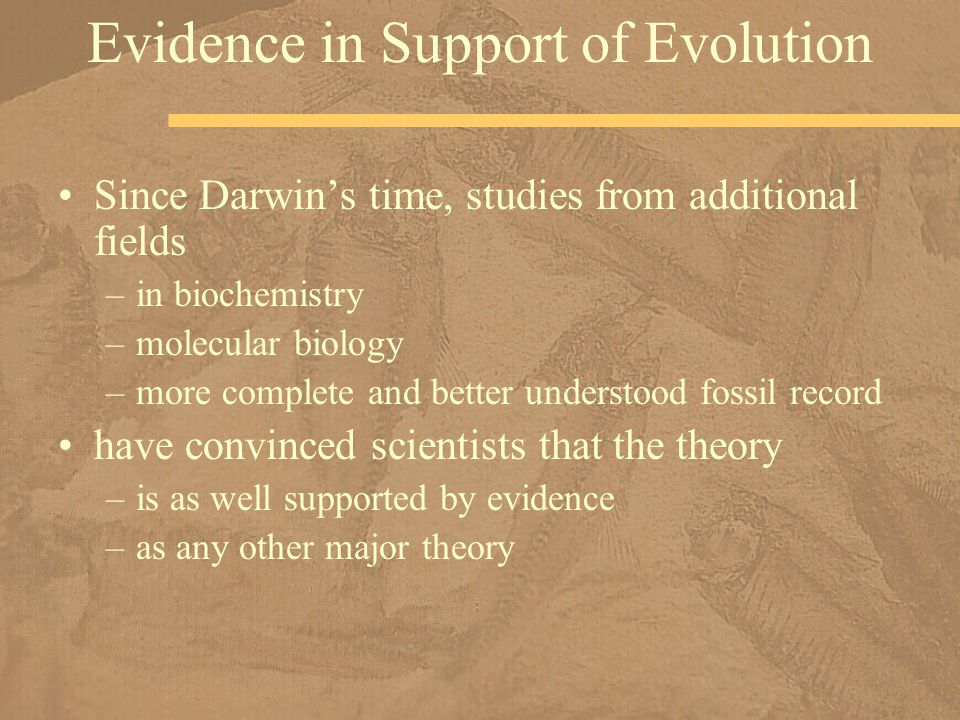 Since Darwin's time, studies from additional fields –in biochemistry –molecular biology –more complete and better understood fossil record have convin