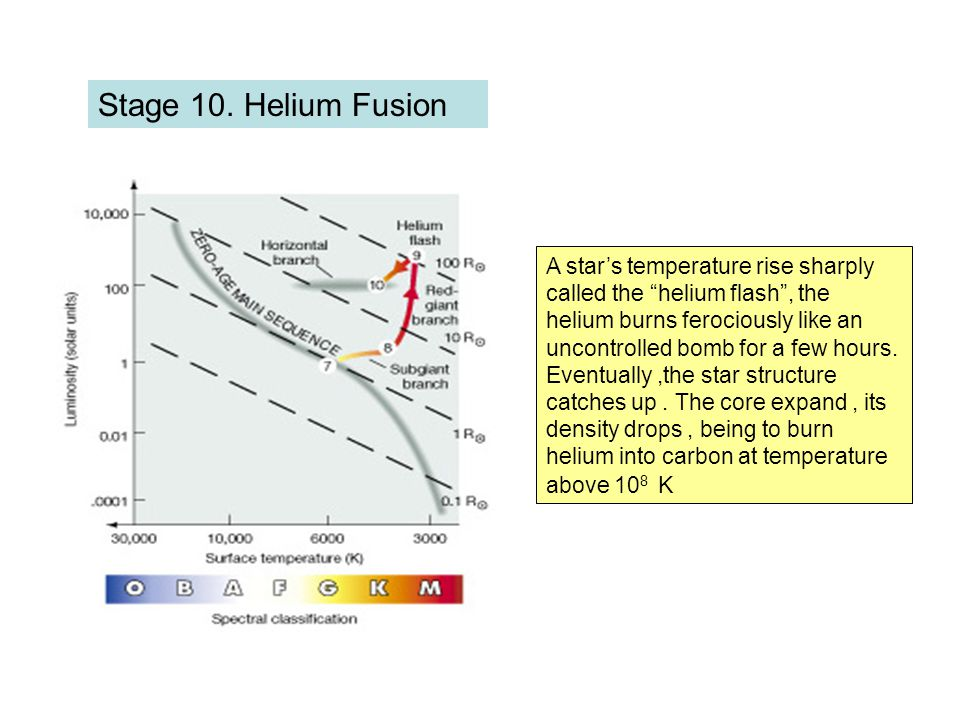 """Stage 10. Helium Fusion A star's temperature rise sharply called the """"helium flash"""", the helium burns ferociously like an uncontrolled bomb for a few"""