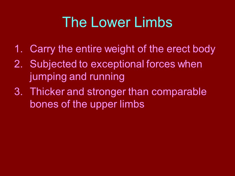 The Lower Limbs 1.Carry the entire weight of the erect body 2.Subjected to exceptional forces when jumping and running 3.Thicker and stronger than comparable bones of the upper limbs