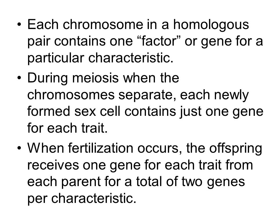 "Each chromosome in a homologous pair contains one ""factor"" or gene for a particular characteristic. During meiosis when the chromosomes separate, each"