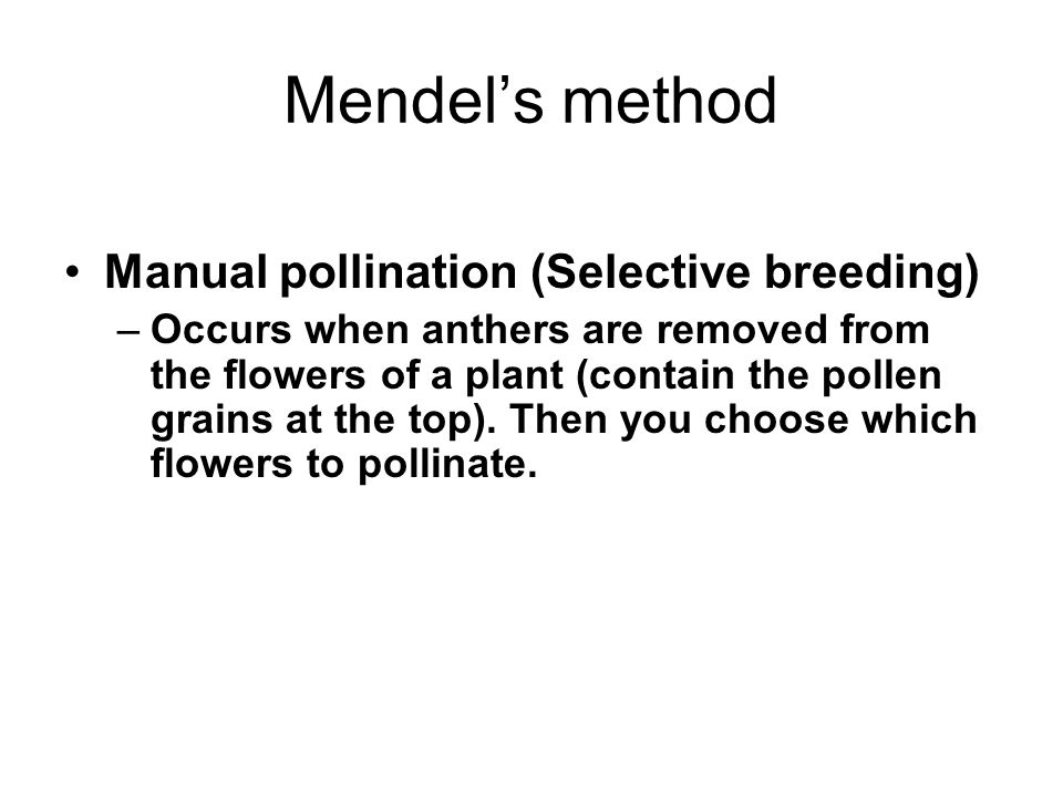 Mendel's method Manual pollination (Selective breeding) –Occurs when anthers are removed from the flowers of a plant (contain the pollen grains at the