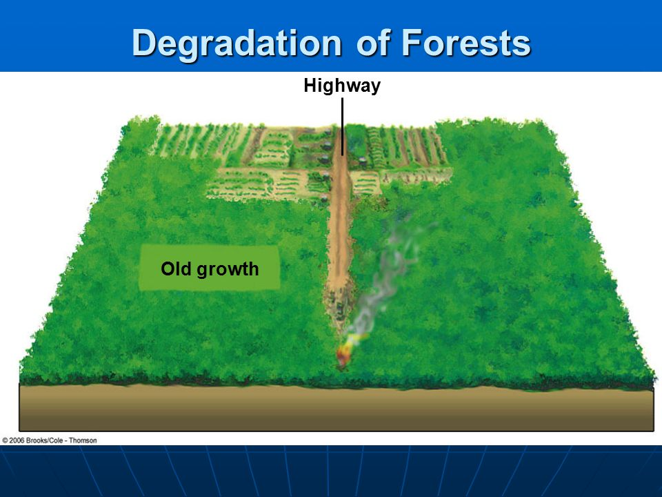 Surface and Crown Forest Fires Ground fire = underground surface fire, common in northern peat bogs