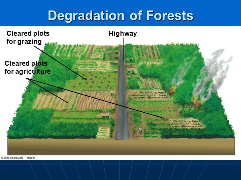 HighwayCleared plots for grazing Cleared plots for agriculture Degradation of Forests