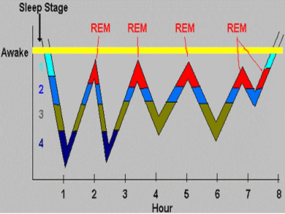 17 Sleep Cycle A repeating 90-minute cycle of changes in brain waves (4-6 times per night) Slower brain waves in deep sleep Deepest sleep during the beginning of the night Increase in REM sleep during the night