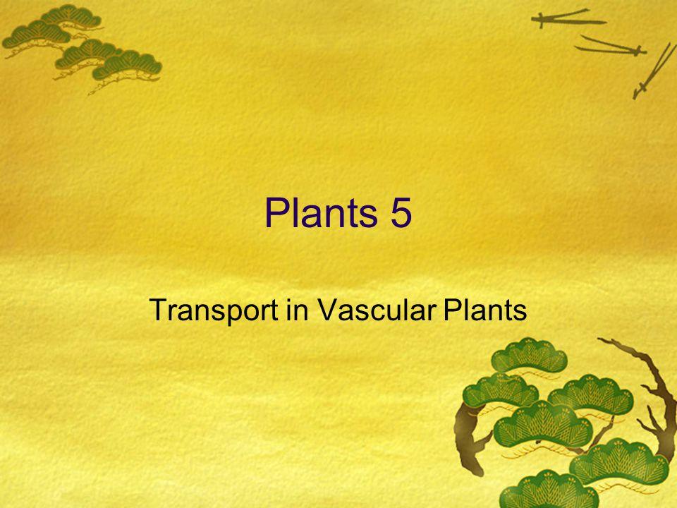 Plants 5 Transport in Vascular Plants