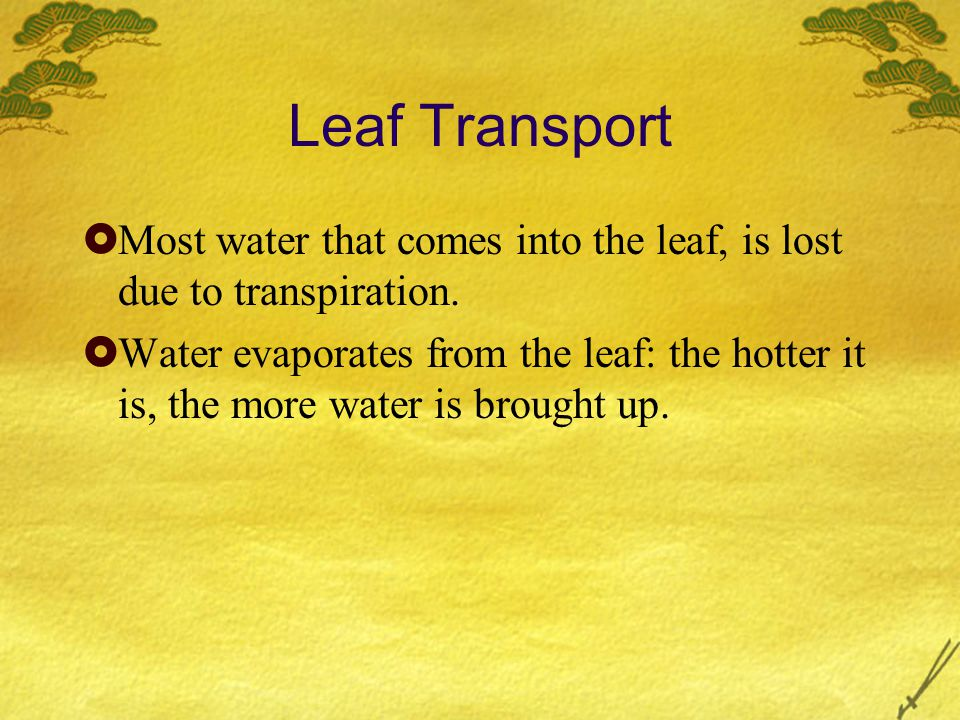 Leaf Transport  Most water that comes into the leaf, is lost due to transpiration.
