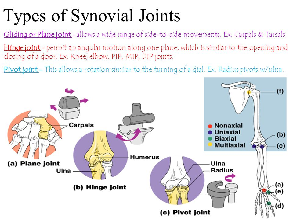 Types of Synovial Joints Gliding or Plane joint –allows a wide range of side-to-side movements. Ex. Carpals & Tarsals Hinge joint - permit an angular