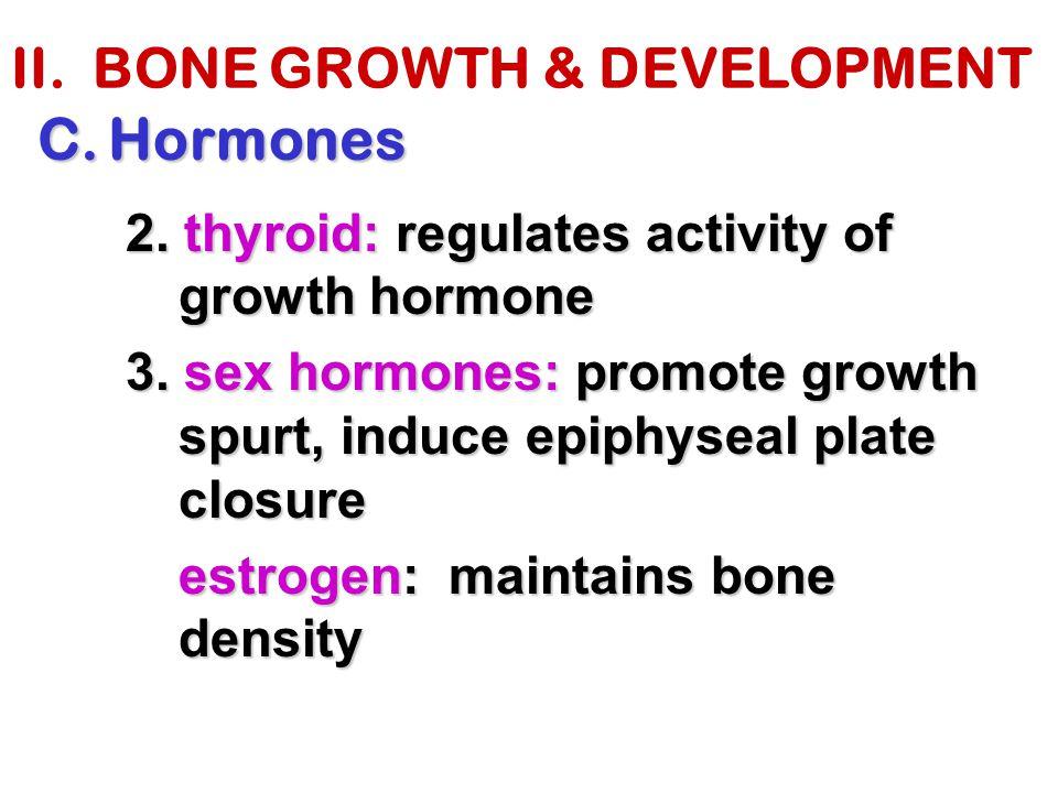 II. BONE GROWTH & DEVELOPMENT C.Hormones 2. thyroid: regulates activity of growth hormone 3. sex hormones: promote growth spurt, induce epiphyseal pla