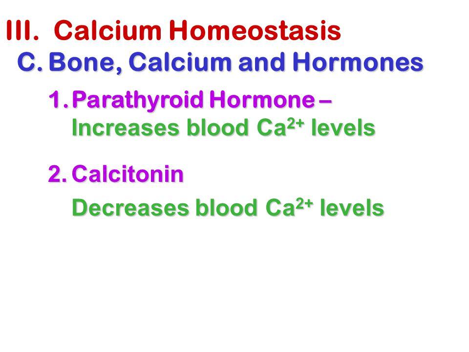 III. Calcium Homeostasis C.Bone, Calcium and Hormones 1.Parathyroid Hormone – Increases blood Ca 2+ levels 2.Calcitonin Decreases blood Ca 2+ levels