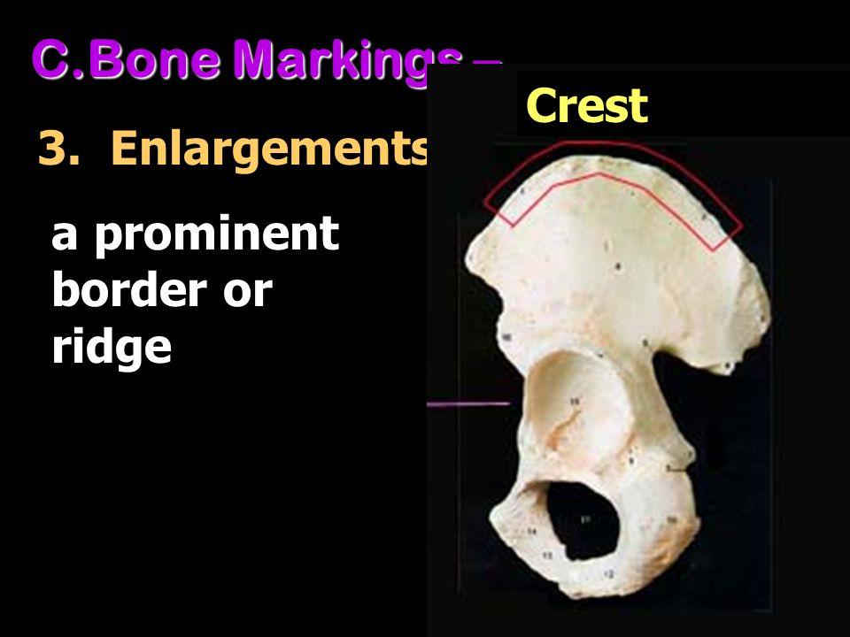 C.Bone Markings – 3. Enlargements a prominent border or ridge Crest
