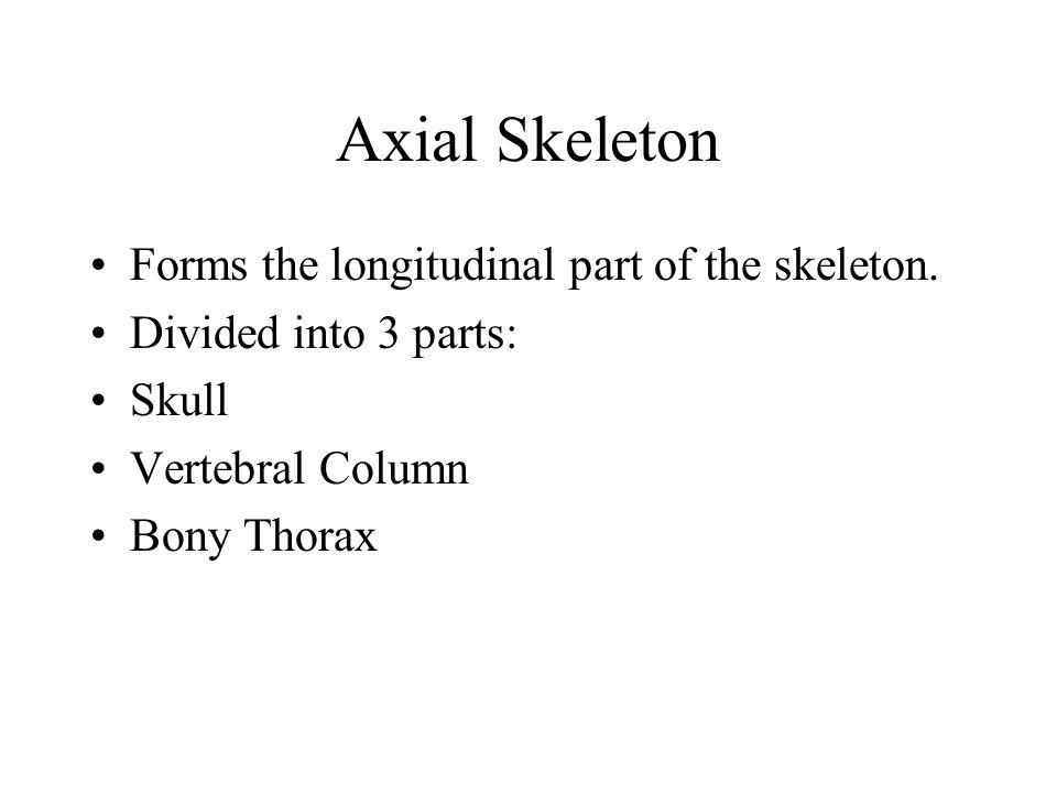Axial Skeleton Forms the longitudinal part of the skeleton. Divided into 3 parts: Skull Vertebral Column Bony Thorax
