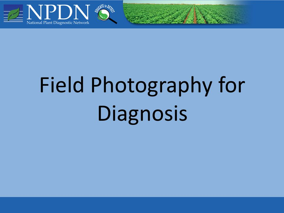 This presentation is intended to assist First Detectors in capturing and submitting effective digital photos to support plant disease diagnostics.