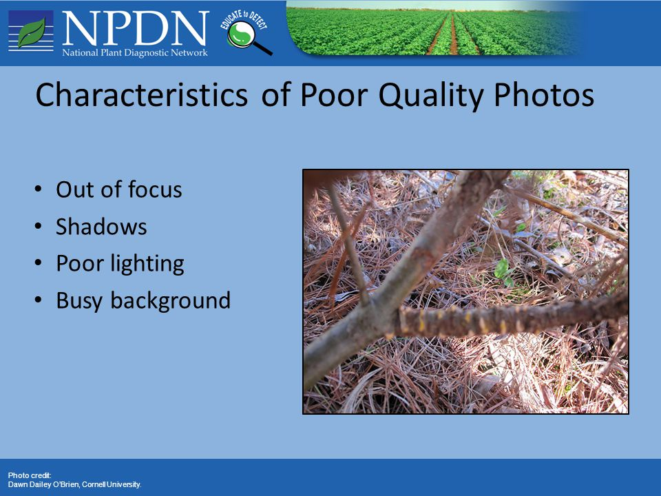 Characteristics of Poor Quality Photos Out of focus Shadows Poor lighting Busy background Photo credit: Dawn Dailey O'Brien, Cornell University.