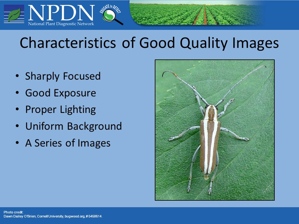 Characteristics of Good Quality Images Sharply Focused Good Exposure Proper Lighting Uniform Background A Series of Images Photo credit: Dawn Dailey O