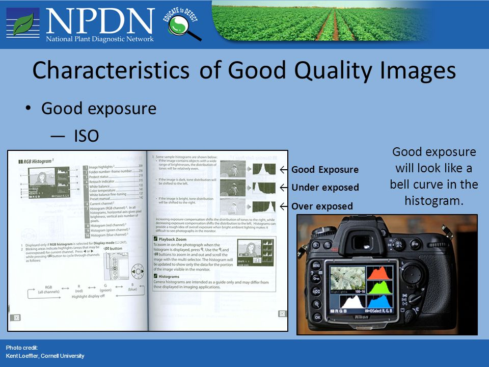 Characteristics of Good Quality Images Good exposure —ISO Photo credit: Kent Loeffler, Cornell University Good exposure will look like a bell curve in