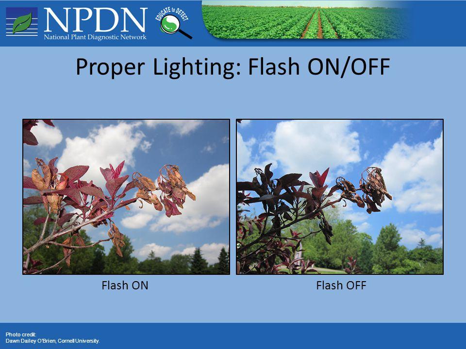 Flash ONFlash OFF Photo credit: Dawn Dailey O'Brien, Cornell University. Proper Lighting: Flash ON/OFF