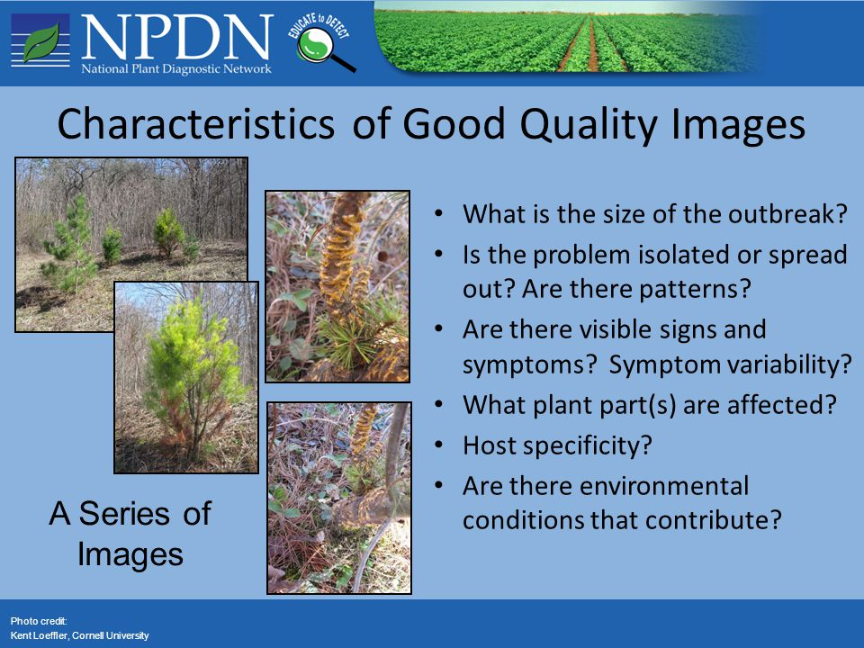 Characteristics of Good Quality Images What is the size of the outbreak? Is the problem isolated or spread out? Are there patterns? Are there visible