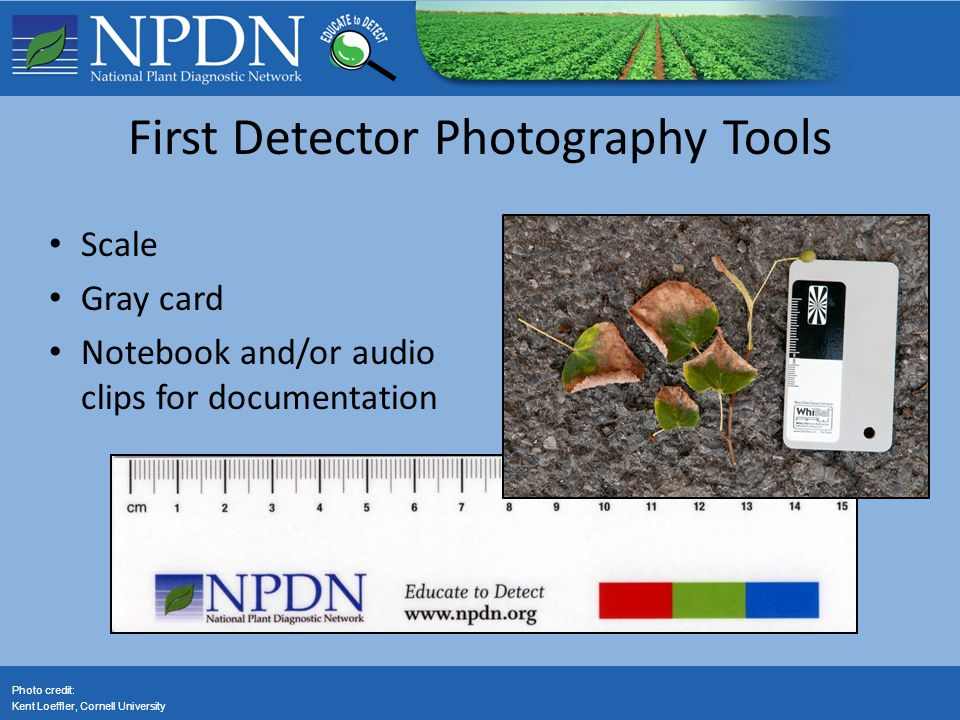 First Detector Photography Tools Scale Gray card Notebook and/or audio clips for documentation Photo credit: Kent Loeffler, Cornell University