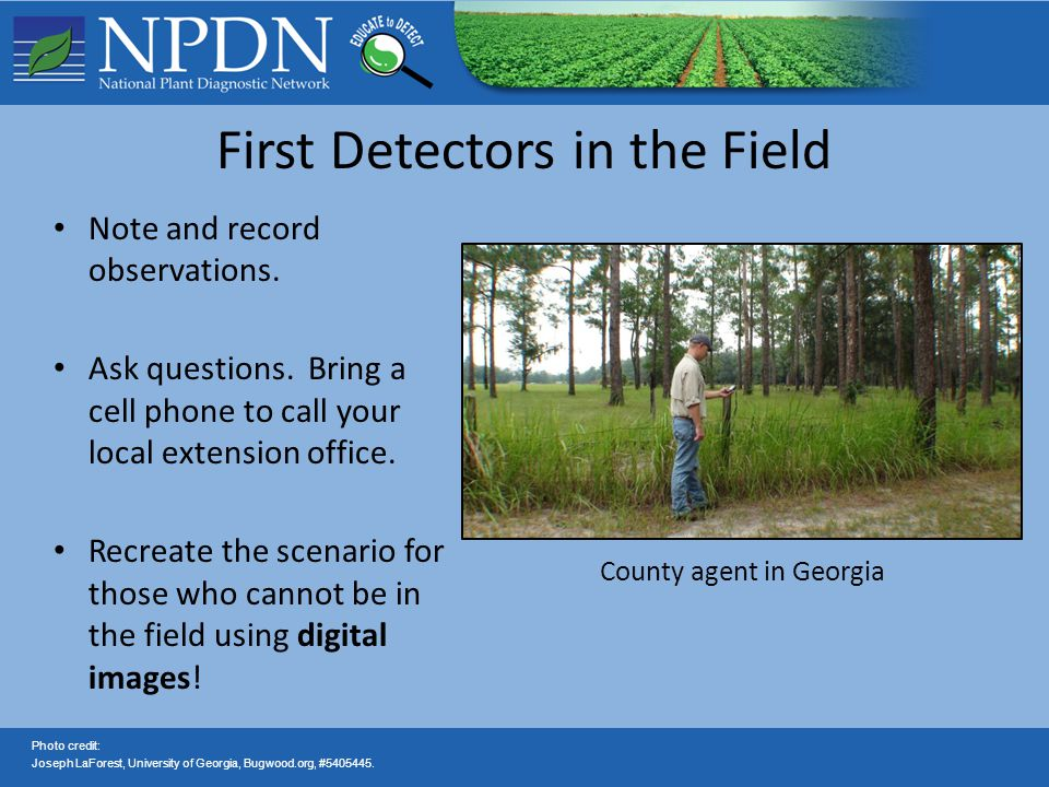 Contact: —Always check with your state diagnostician if you have sample questions To find your local NPDN lab or for more information on the NPDN —www.npdn.org NPDN First Detector Training Website —www.firstdetector.org Questions?