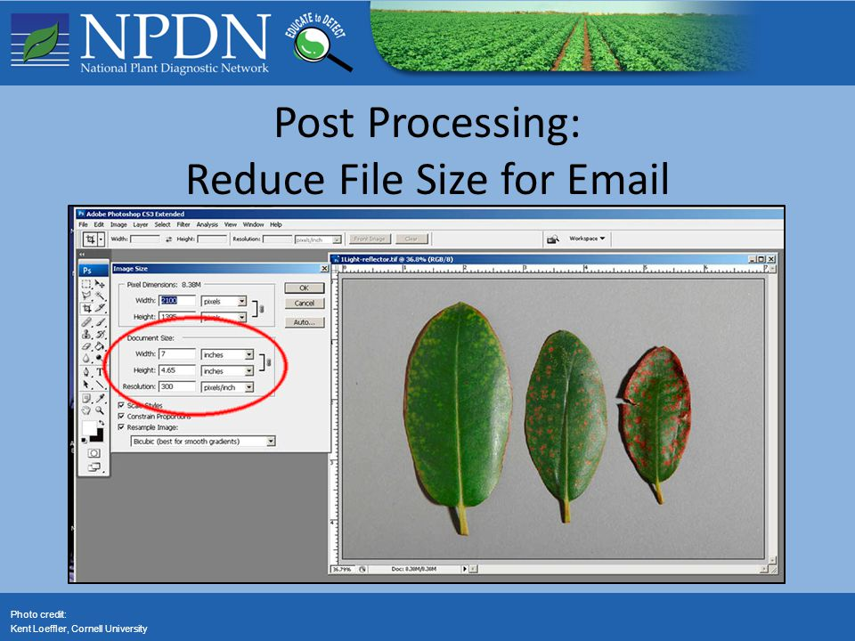 Photo credit: Kent Loeffler, Cornell University Post Processing: Reduce File Size for Email