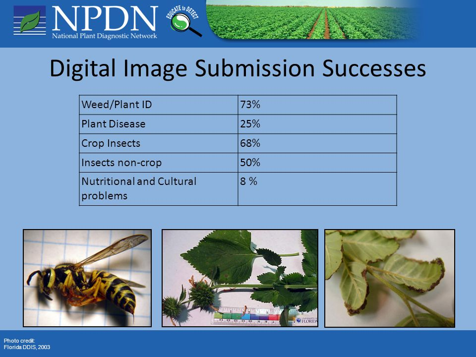 Digital Image Submission Successes Photo credit: Florida DDIS, 2003 Weed/Plant ID73% Plant Disease25% Crop Insects68% Insects non-crop50% Nutritional