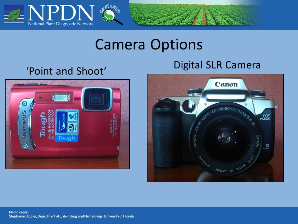 'Point and Shoot' Camera Options Digital SLR Camera Photo credit: Stephanie Stocks, Department of Entomology and Nematology, University of Florida