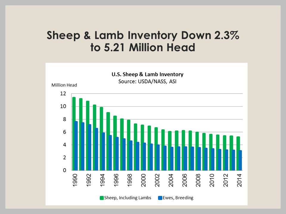 Sheep & Lamb Inventory Down 2.3% to 5.21 Million Head