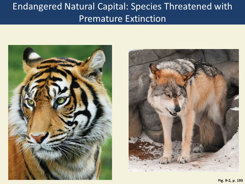Fig. 9-2, p. 193 Endangered Natural Capital: Species Threatened with Premature Extinction