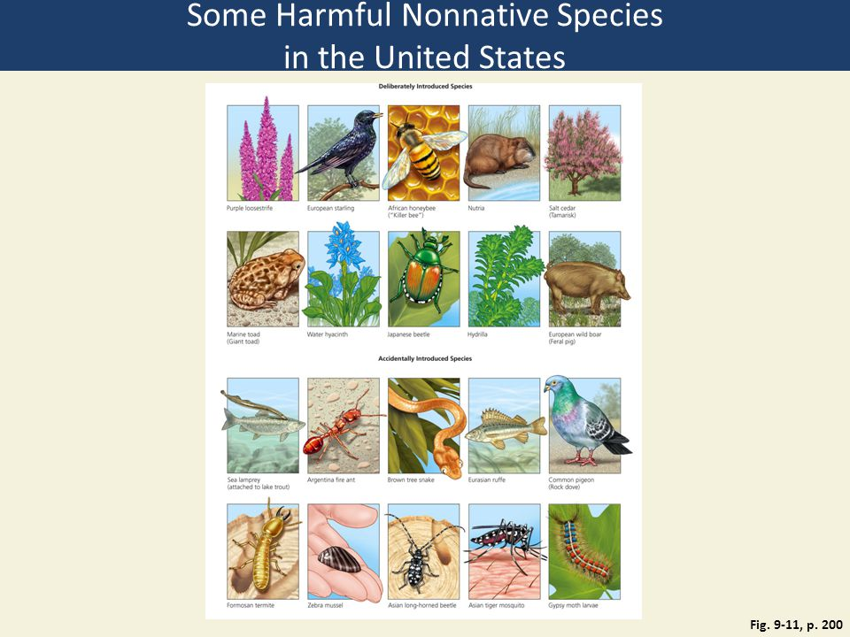 Fig. 9-11, p. 200 Some Harmful Nonnative Species in the United States