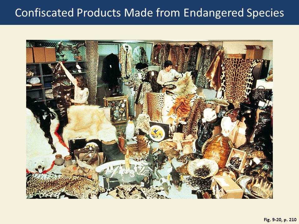 Fig. 9-20, p. 210 Confiscated Products Made from Endangered Species