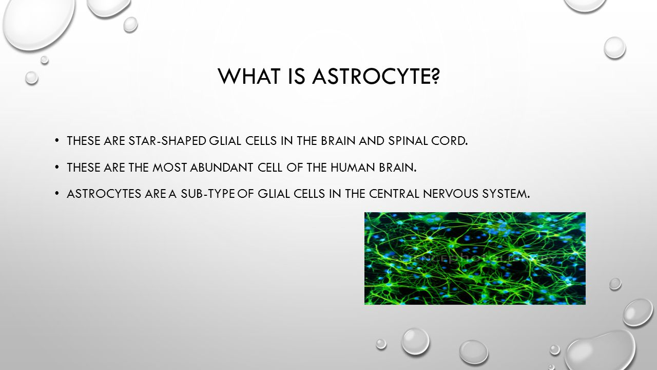 WHAT IS ASTROCYTE? THESE ARE STAR-SHAPED GLIAL CELLS IN THE BRAIN AND SPINAL CORD. THESE ARE THE MOST ABUNDANT CELL OF THE HUMAN BRAIN. ASTROCYTES ARE