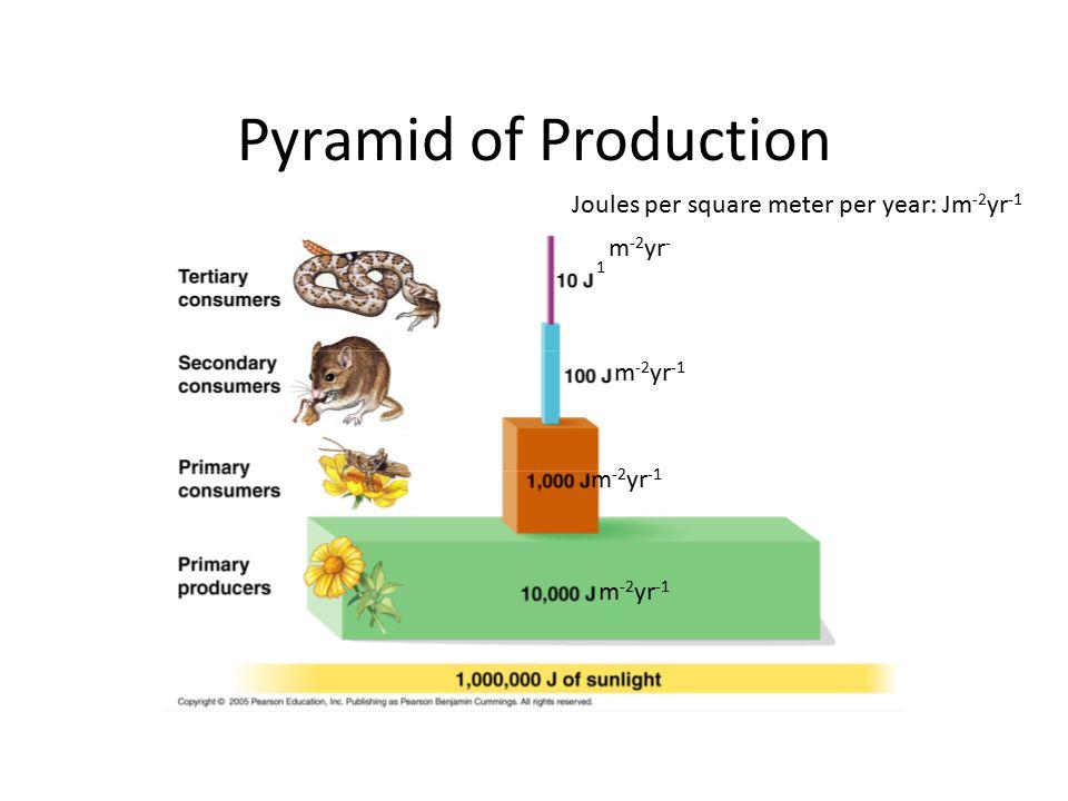 Pyramid of Production Joules per square meter per year: Jm -2 yr -1 m -2 yr - 1