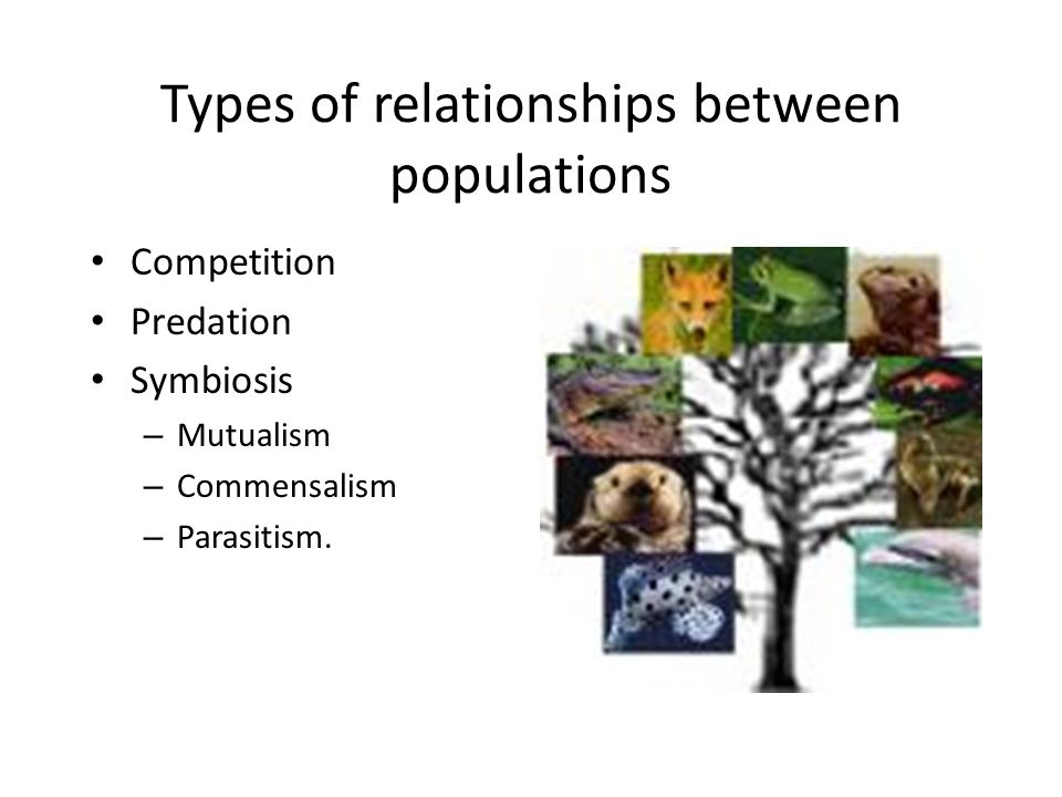 Types of relationships between populations Competition Predation Symbiosis – Mutualism – Commensalism – Parasitism.
