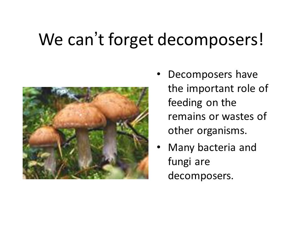 We can ' t forget decomposers! Decomposers have the important role of feeding on the remains or wastes of other organisms. Many bacteria and fungi are